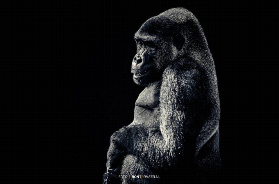 Gorilla Ouwehand