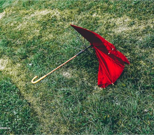 paraplu op grasveld