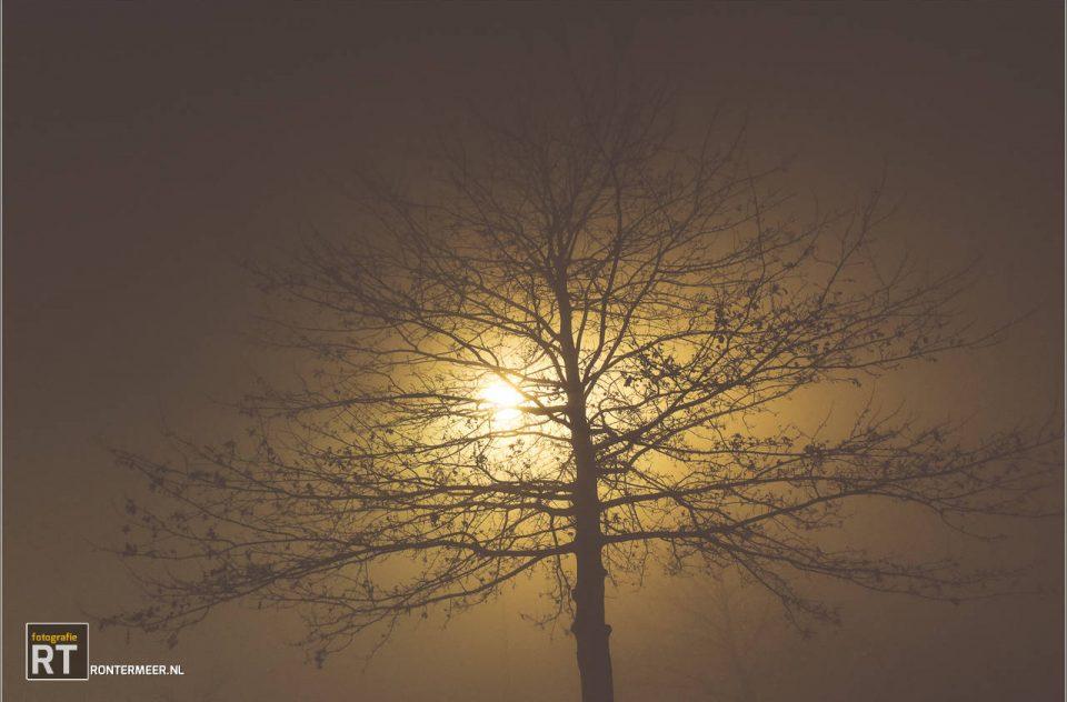 Zie de maan schijnt…