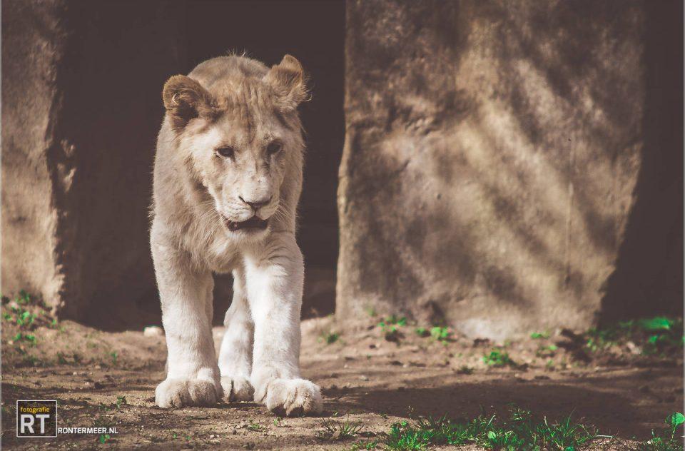 Leeuwin op zoek naar…